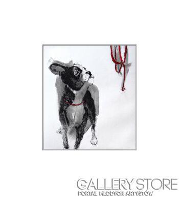 """Greta Agneża - Siemczuk-"""" Boston Terrier IV"""" z cyklu """" Pies"""" z kolorem-Grafika"""