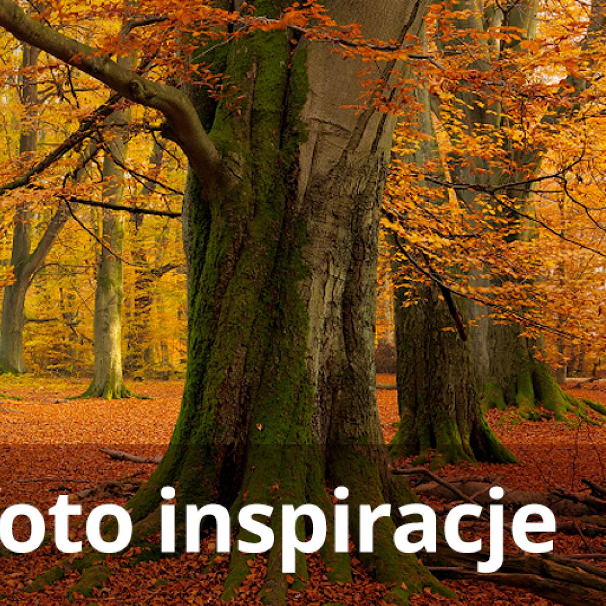Pod patronatem Gallerystore: Konkurs Canon&Komputronik: Foto inspiracje - Edycja jesienna!