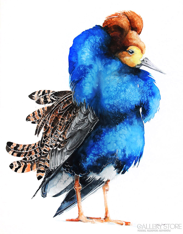 Batalion Ptaki Przyroda Natura I Zwierzęta W Akwareli Karolina