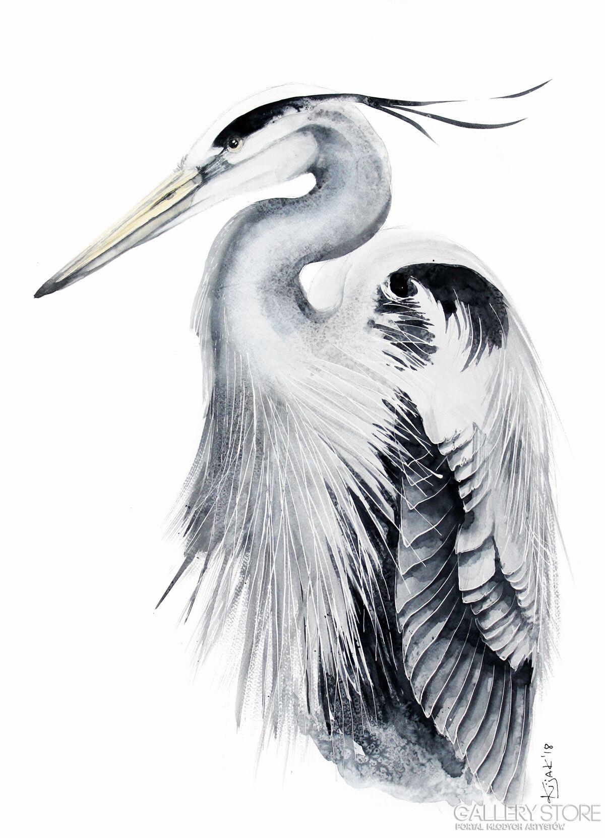 Czapla Siwa Ptaki Polski W Akwareli