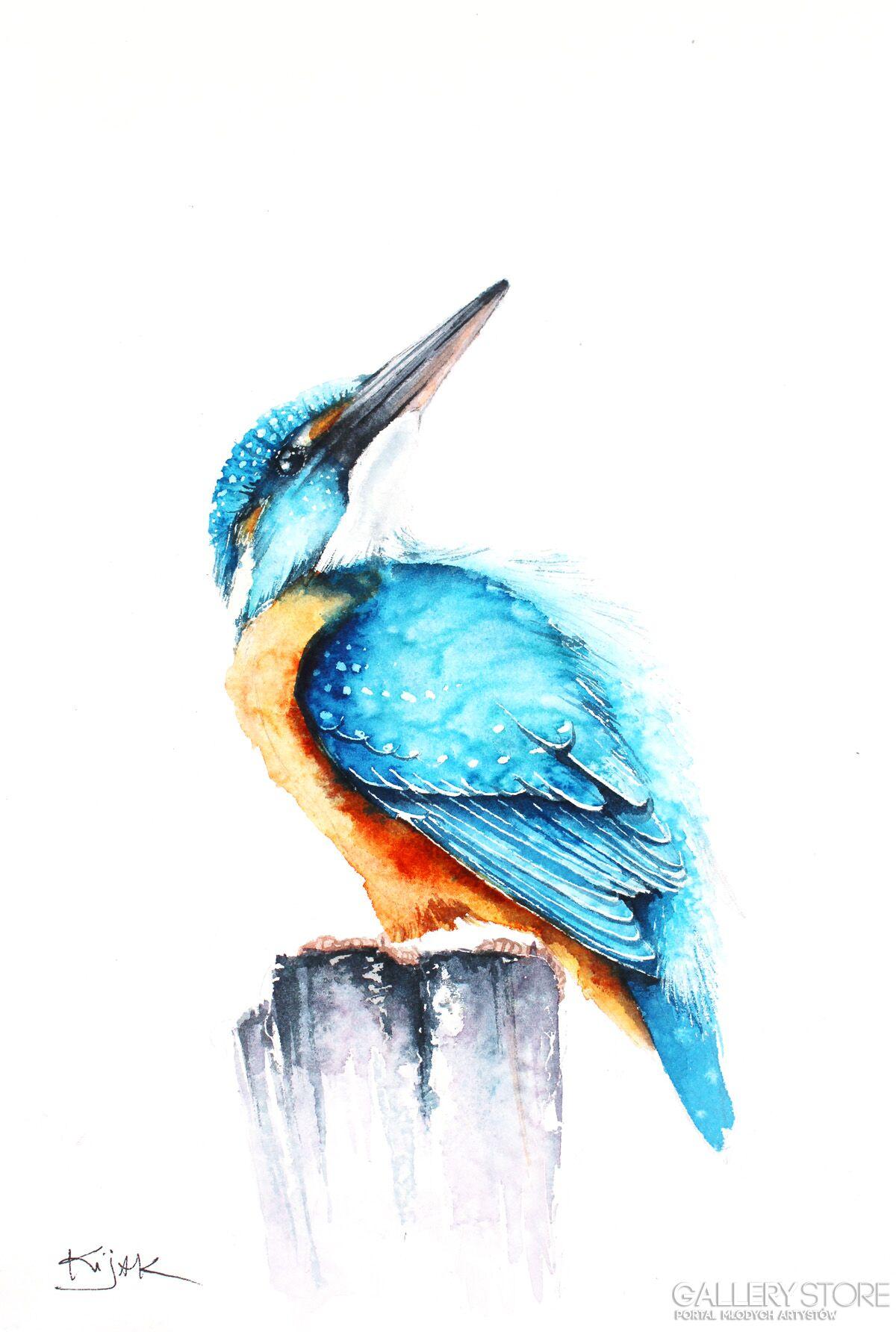 Zimorodek Ptaki Zwierzęta Przyroda Karolina Kijak Galeria
