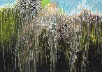 Angelika Mus-Nowak-Czy warto zwracać uwagę na świecące trawy?-Rysunek