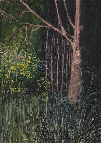 Angelika Mus-Nowak-Fotosynteza-Rysunek
