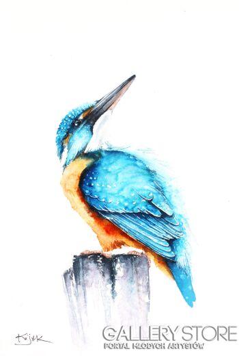 Karolina Kijak-Zimorodek, ptaki, zwierzęta, przyroda-Akwarela