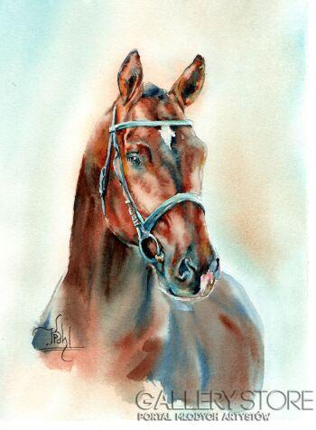 Klaudiusz Pohl-Głowa konia 2-Akwarela