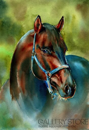 Klaudiusz Pohl-Głowa konia 3-Akwarela
