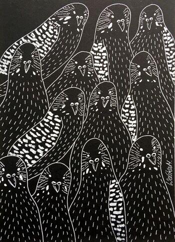 Marcin Waśka-Papugi 2-Rysunek