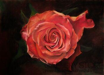 Natalia Ziomek- Wilusz-Pomarańczowa róża-Inna