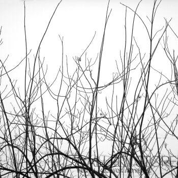 Patrycja Dudek-Branch-Fotografia