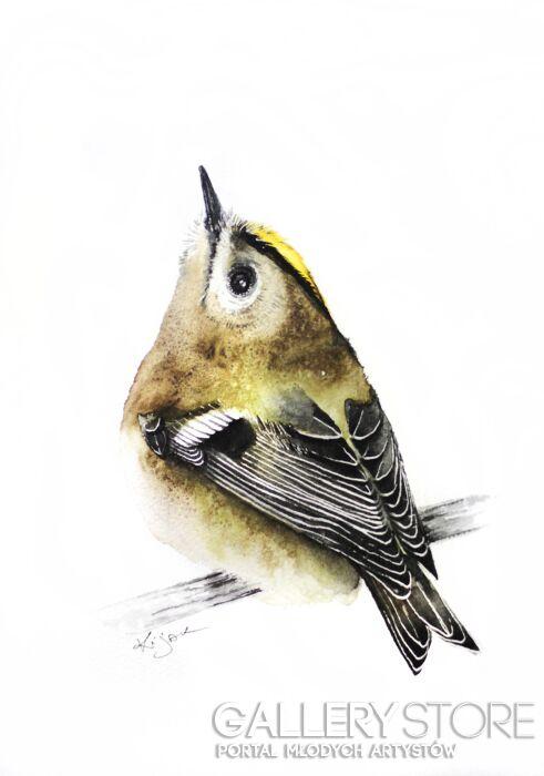Karolina Kijak-Mysikólik, ptaki, przyroda, natura i zwierzęta w akwareli-Akwarela