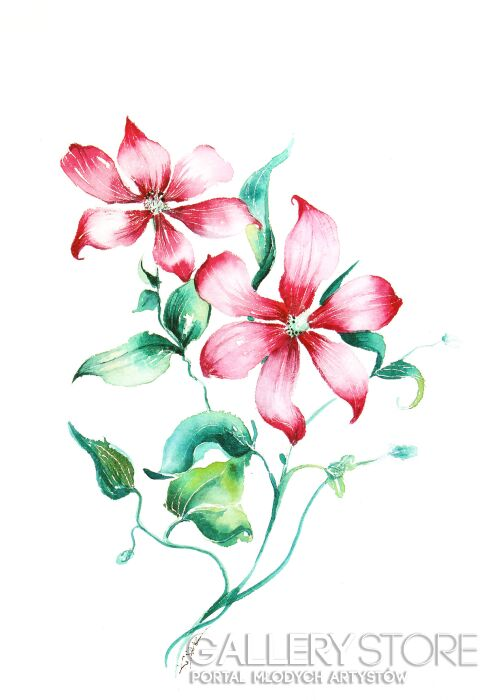 Karolina Kijak-Różowe lilie-Akwarela